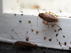 Kakkerlakken overlast