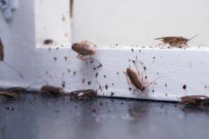 Kakkerlakken plaag in huis