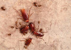 Last van kakkerlakken