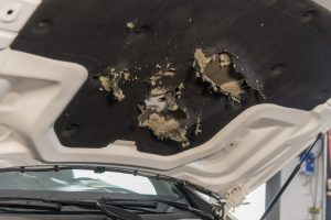 Schade auto door steenmarter