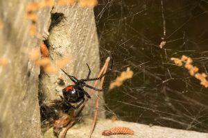 Spinnen overlast in huis